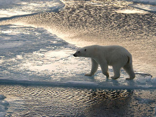 Tracking_Polar_Bears_travel_blog