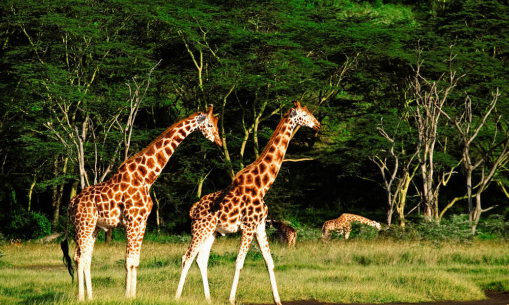 East Africa vs. Southern Africa: How to Choose for your Safari