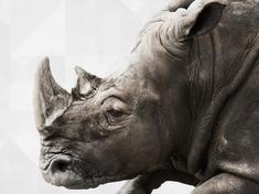 Wwf portraitnav rhinos bgcropped