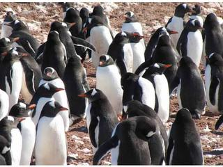 penguins_colony_travel_blog