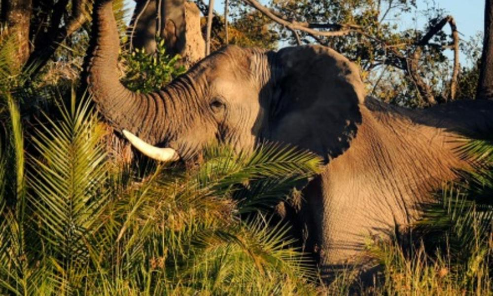 """Ten Wild Facts about the """"Big Five"""" 