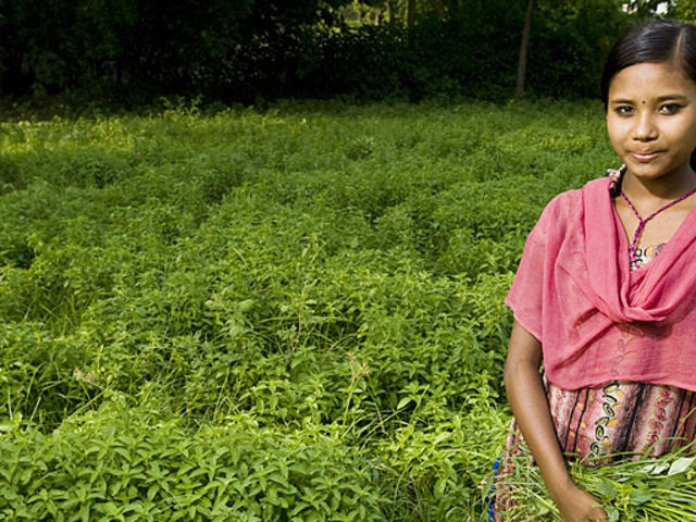 Pashupati Choudhary (14), weeding a crop of mint (Mentha arbensis). WWF&#x27;s Terai Arc Landscape (TAL) program introduced the idea of mentha farming in order to reduce human/wildlife conflict and to increase a farmer&#x27;s income through greater profit margins a