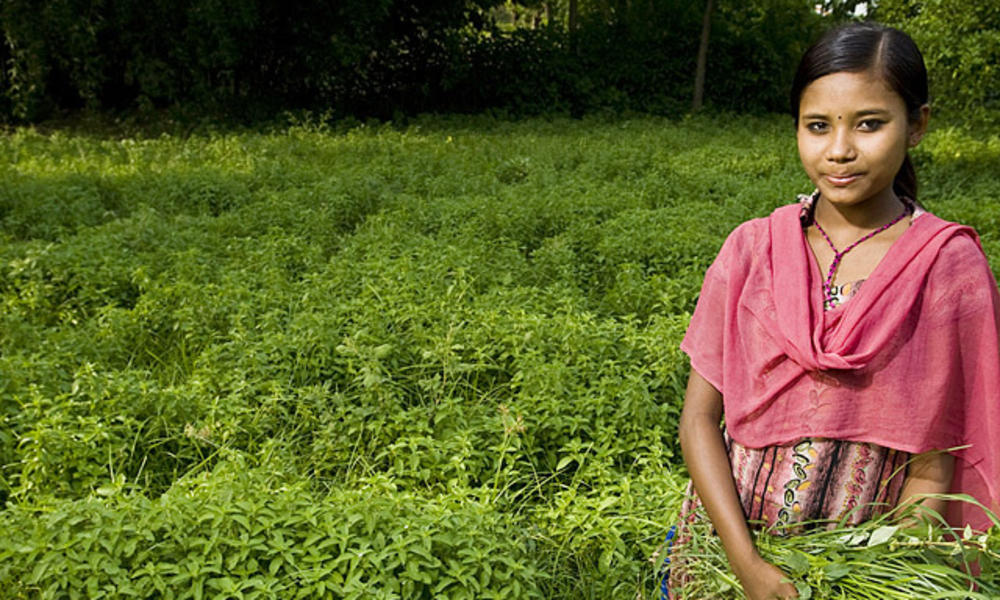 Pashupati Choudhary (14), weeding a crop of mint (Mentha arbensis). WWF's Terai Arc Landscape (TAL) program introduced the idea of mentha farming in order to reduce human/wildlife conflict and to increase a farmer's income through greater profit margins a
