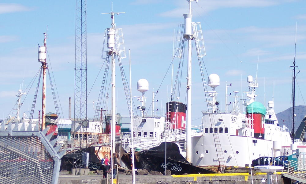 Whaling ships equipped with harpoons used to hunt whales in Iceland