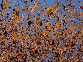 monarchs cloud mexico travel