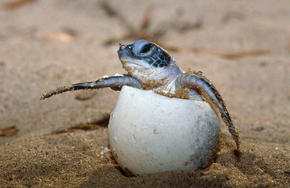 sea turtle egg mexico travel
