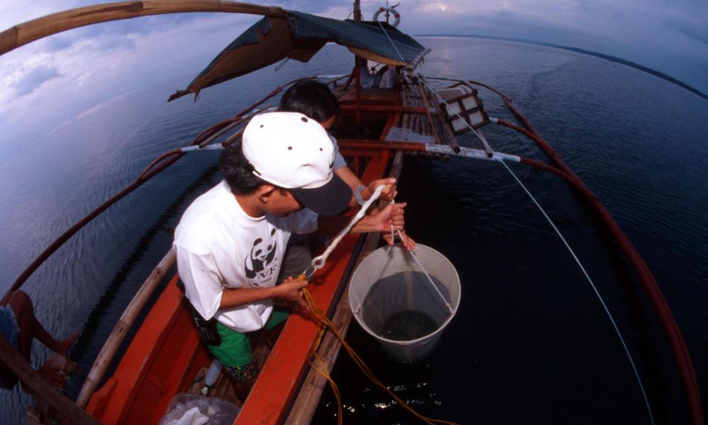 WWF-Philippines' biologist taking plancton samples