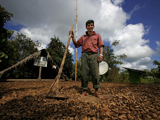 A sustainable Brazil nut farmer standing amongst his drying brazil nuts.