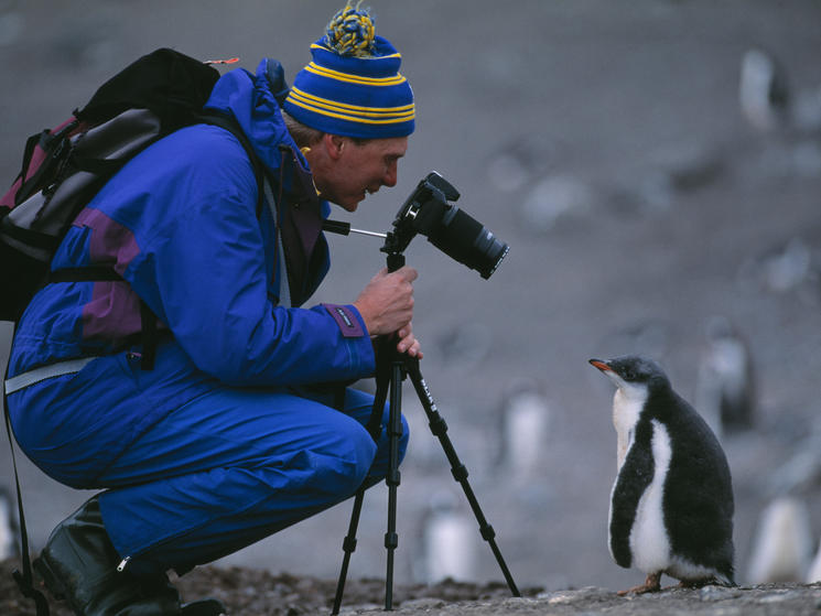 Gento penguin and ecotourist %28c%29 steffan widstrand wwf