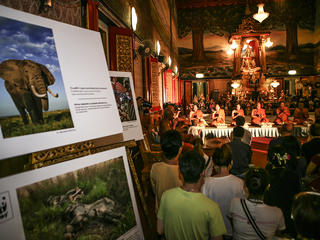 Buddhists and elephant portrait