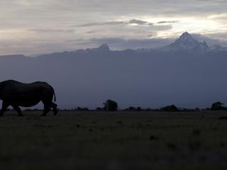 Black rhino in silhouette, Kenya