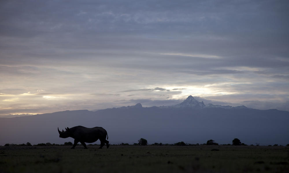 Black rhino in silhouette, Kenya