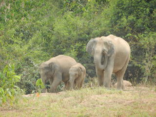 KuriBuri elephants