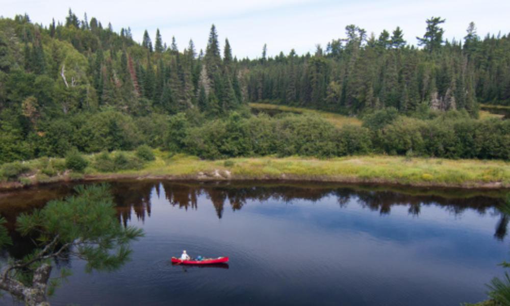 Canoe in pond