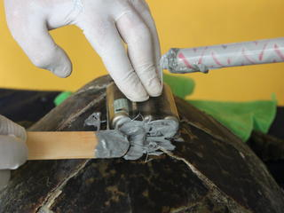 5-Epoxy_satellite_tag_hawksbill_turtle_Gorgona_Island_Colombia_Molly_Edmonds.JPG