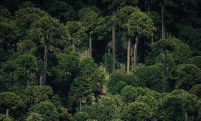 Forests are a vital resource for life on earth. They provide invaluable environmental, social and economic benefits to us all. Forests improve air and water quality, reduce soil erosion and act as a buffer against global warming. The forest industry also