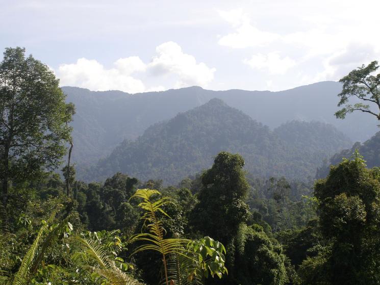 Borneo-and-sumatra-what-wwf-doinghi_113455
