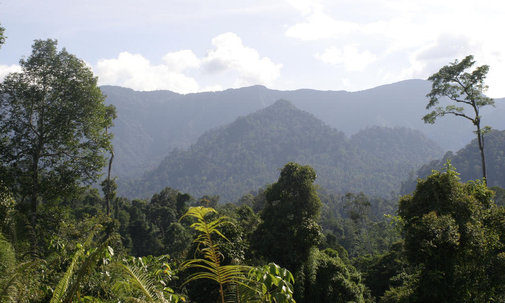 Borneo and sumatra what wwf doinghi 113455
