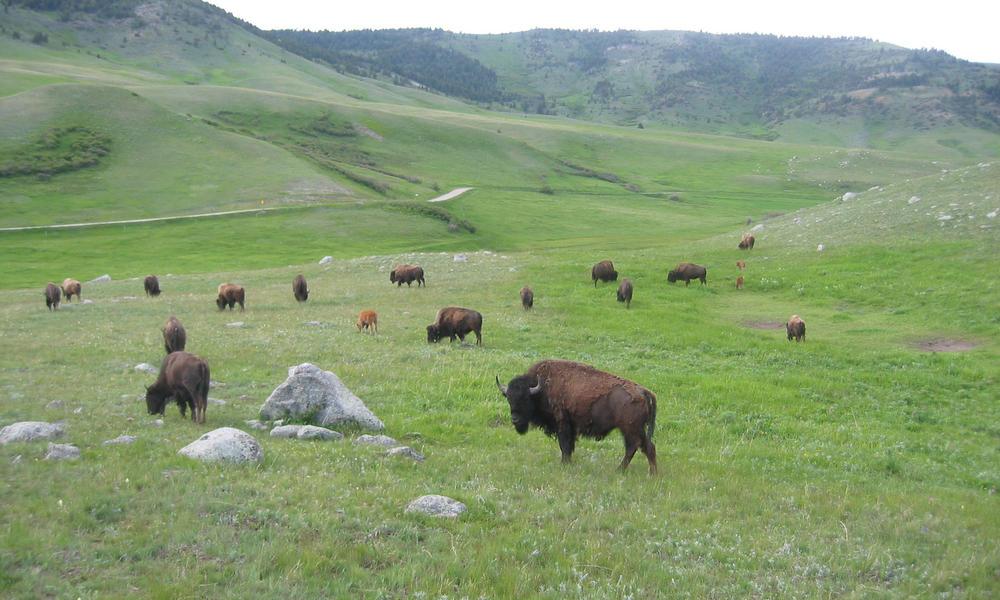 fantasy life how to get to west grassy plains