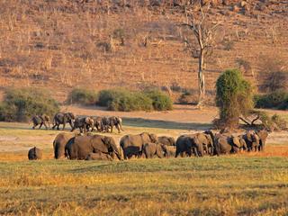 KAZA elephants