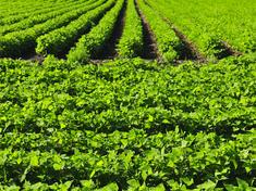 Row_crops_blog_1