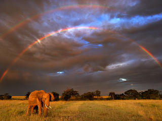 Elephant and rainbow