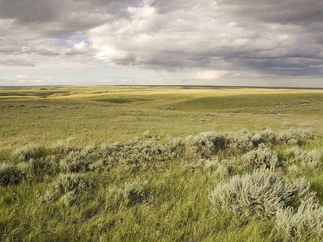 NGP Landscape