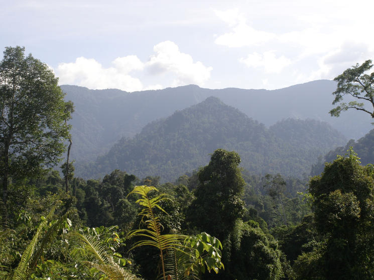 On_balance_header_image_borneo_landscape