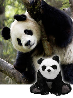 Make a symbolic panda adoption today
