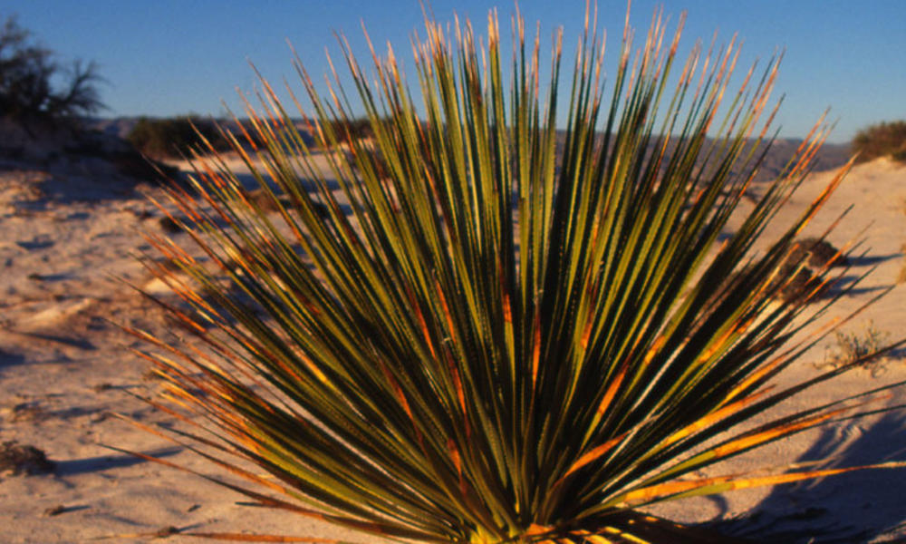 Chihuahuan Desert Places Wwf