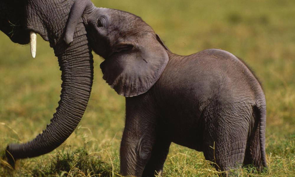 Elephant mom and calf