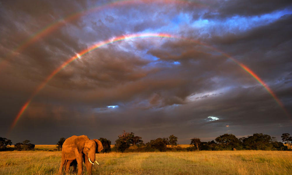 Obama Pledges Support to Stop Wildlife Crime in Africa