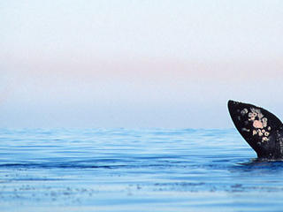 whale tale in baja
