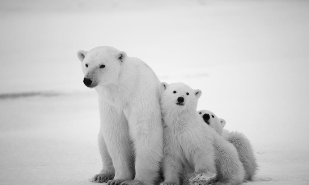 Source: WWF