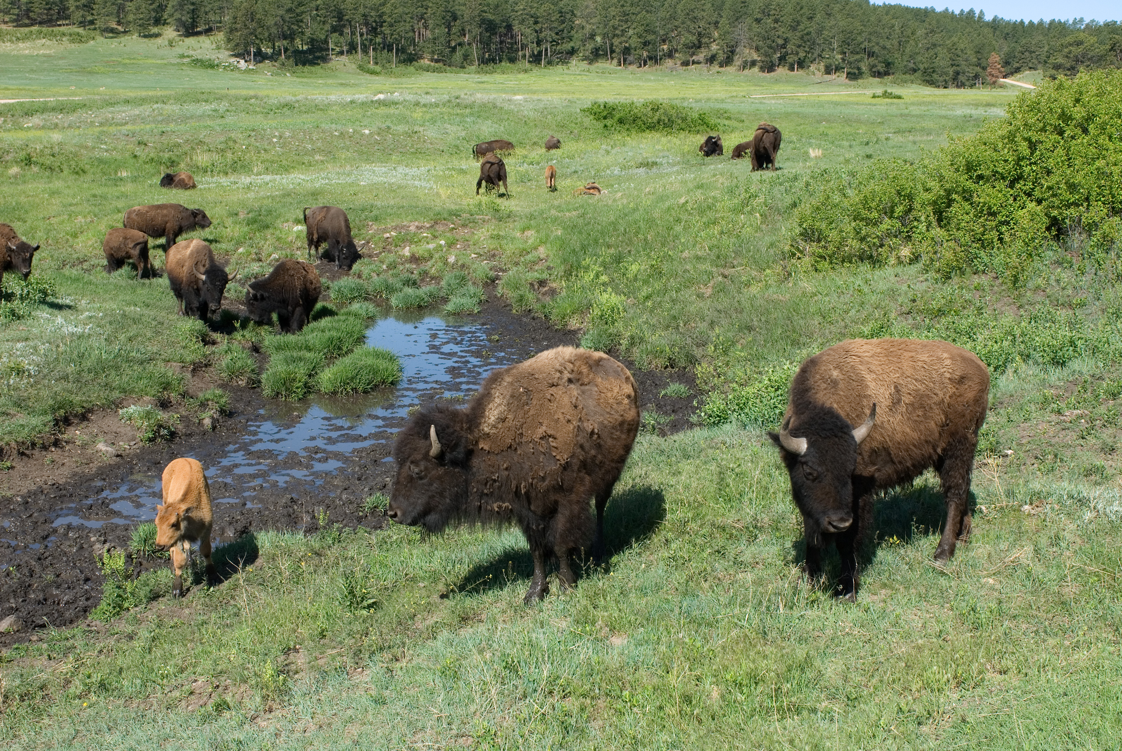 american great plains animals - photo #24