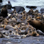 Seals on a rocky beach