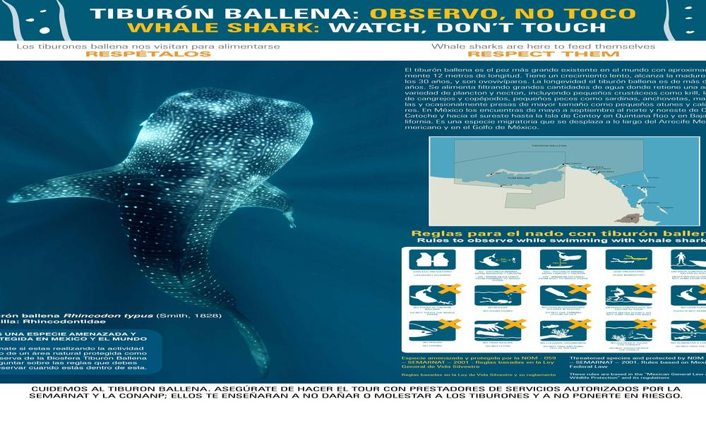 Rules for Swimming with Whale Sharks
