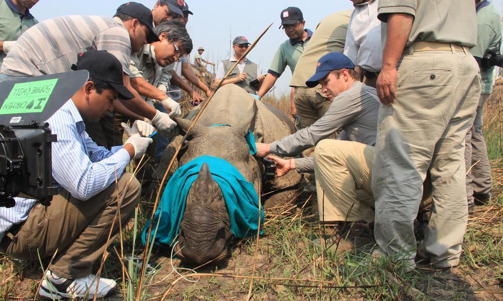 Simrika Sharma/WWF