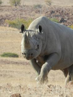 Rhino_Don't_Worry_Travel