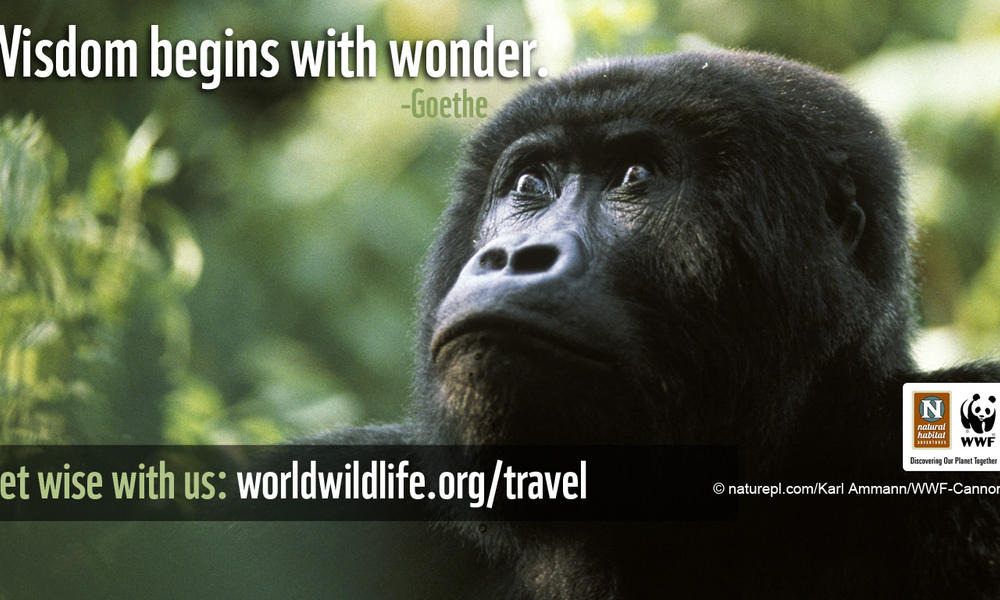 Travel Wallpaper - 1366x768 Gorilla Wisdom