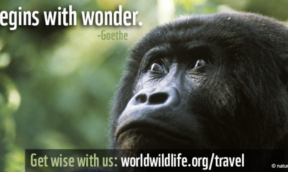 Travel Wallpaper - FB 851x315 Gorilla Wisdom