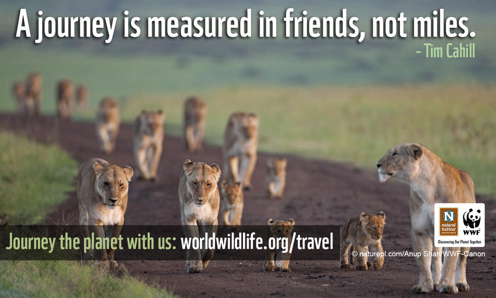 Travel Wallpaper - 1280x800 Journey Lions