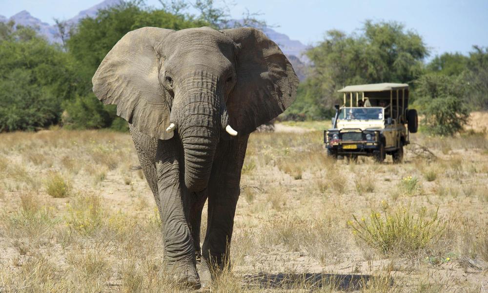 elephant and safari