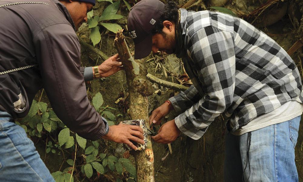 attach camera to tree