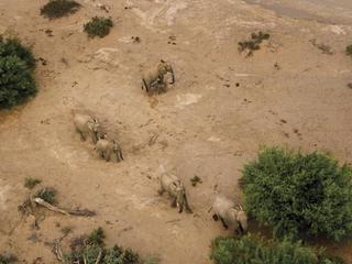 elephants aerial
