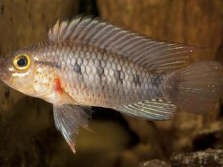 new amazon fish