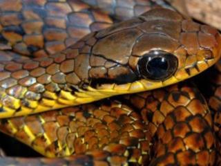 new Amazon snake