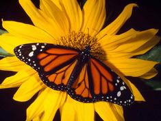Butterfly-test-saved-for-web