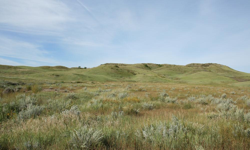 greener grasslands