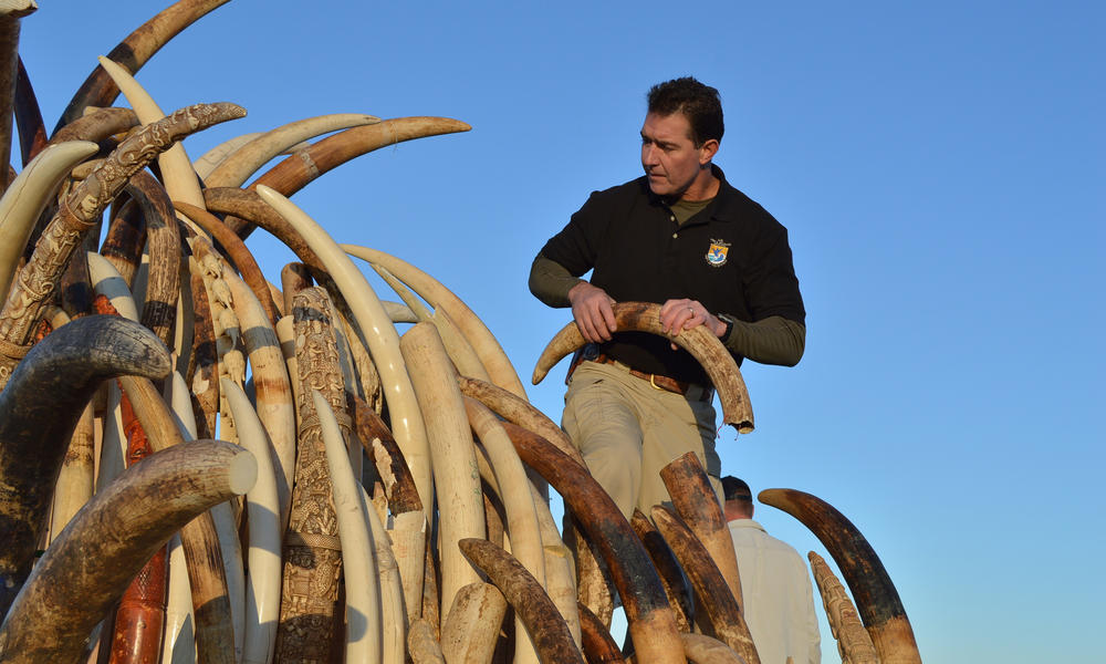 US to Destroy More than 1 Ton of Ivory in Times Square: WWF Statement